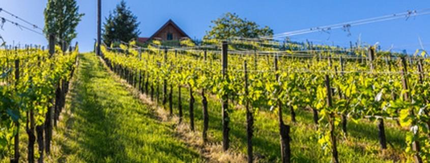 Weingarten, Steiermark, Österreich