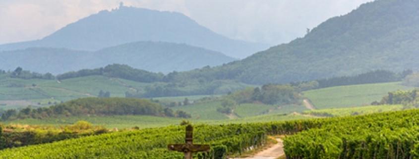 Berühmte Weinstraße im Elsass, Frankreich