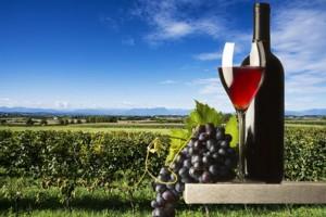 Glas Rotwein und Weinberg