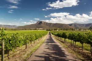 Weinanbau Australien