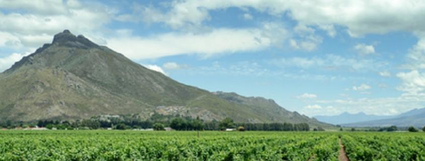 Weinanbau Südafrika