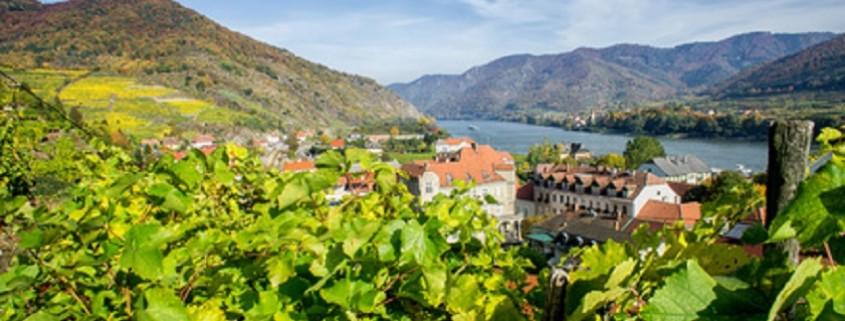 Weinberg in Niederösterreich