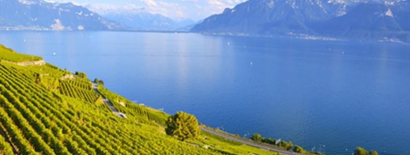 Weinberge in Lavaux Region, Schweiz
