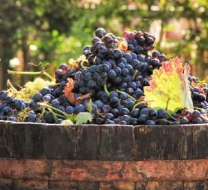 schmackhafte-Weintrauben