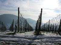 winter_g